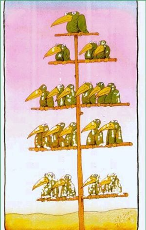 Hierarchy of birds